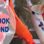 How to look after pond fish | Warehouse Aquatics | Middlewich