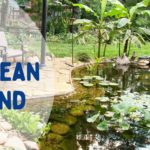 How to clean your pond filter | Warehouse Aquatics | Middlewich