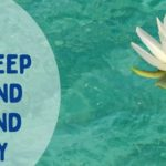 How to keep your pond clear and healthy | Warehouse Aquatics | Middlewich