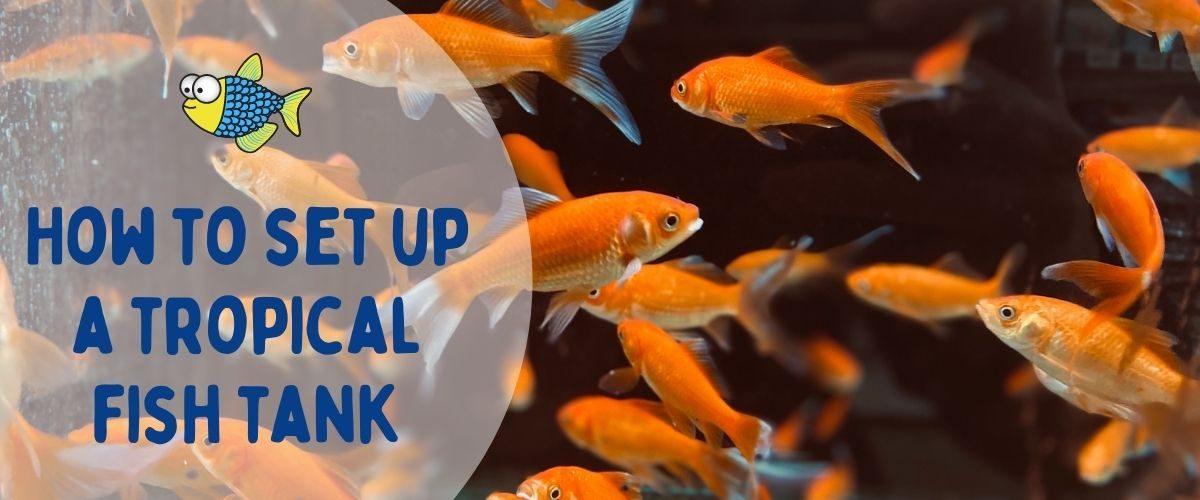 How to set up a tropical fish tank | Warehouse Aquatics | Middlewich