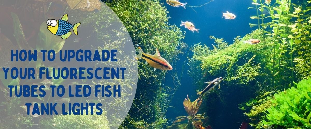 How to upgrade your fluorescent tubes to LED fish tank lights   Warehouse Aquatics   Middlewich