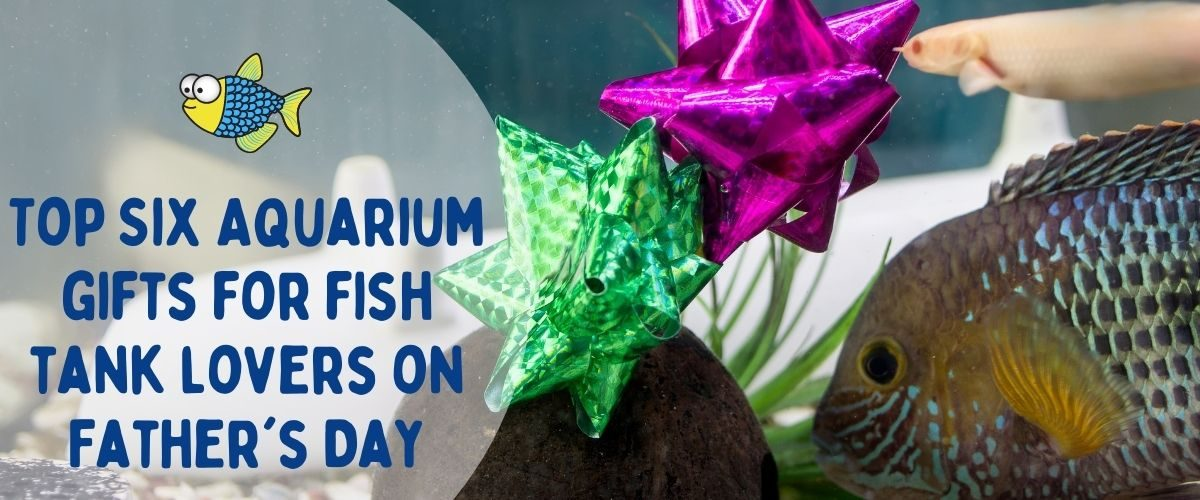 Top six aquarium gifts for fish tank lovers on Father's Day   Warehouse Aquatics   Middlewich