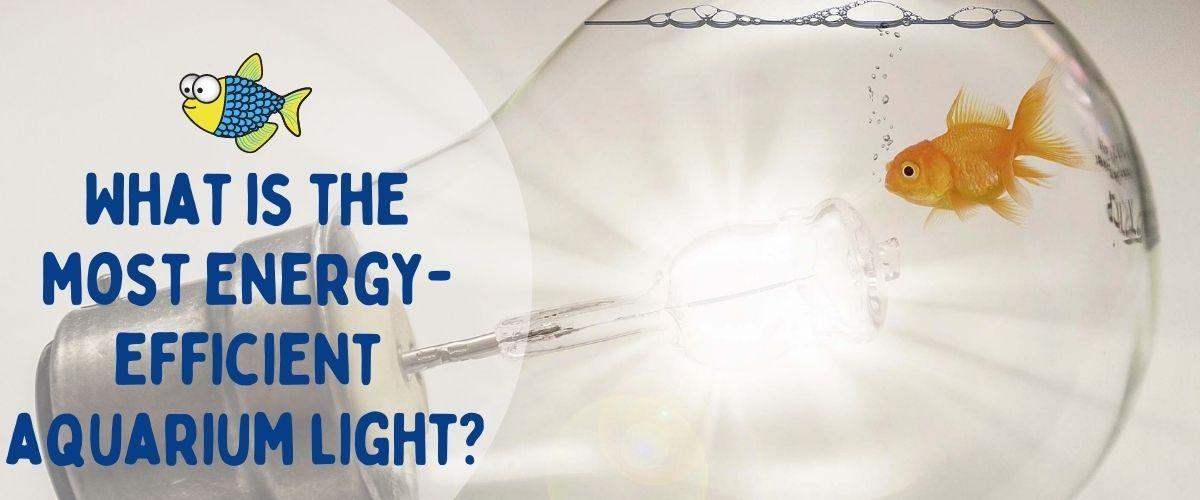 What is the most energy-efficient aquarium light | Warehouse Aquatics | Middlewich